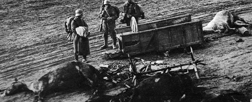 Zniszczony zaprzęg. Mówi się, że Pierwsza Wojna Światowa zabiła konia. Choć jest to przenośnia (w istocie jazda i tabory zaczęły odgrywać coraz mniejszą rolę) to rzeczywiście pod ogniem artylerii i karabinów maszynowych padało na froncie bardzo wiele zwierząt.