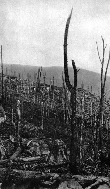 Las w Wogezach. Niszcząca siła wojny dotknęła nie tylko miasta. Zmasowane natarcie, podejmowane przez liczącą dziesiątki i setki tysięcy żołnierzy armię, wymagało starannego przygotowania artyleryjskiego. Obracało ono w perzynę okolicę, w której znajdowały się oddziały przeciwnika. Sterczące ku niebu, wypalone kikuty drzew nie należały do rzadkości tam, gdzie linia frontu stabilizowała się na wiele miesięcy.