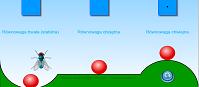 Rodzaje równowagi (flash)