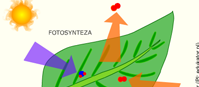 Oddychanie roślin w ciągu dnia (flash)