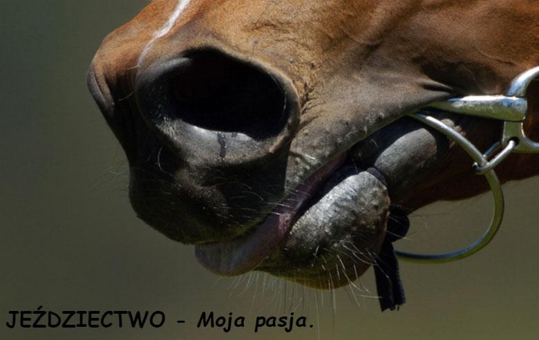 Jeździectwo - moja pasja