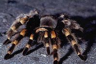 Pająki i pajęczaki