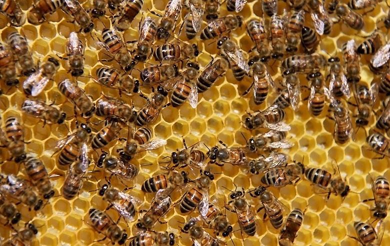 Znaczenie owadów w przyrodzie
